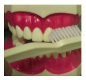 brushing1